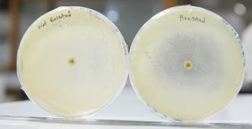 Antibioottien toimitusketjut suurissa ongelmissa