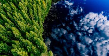 VTT:n johdolla luodaan metsän digikaksonen