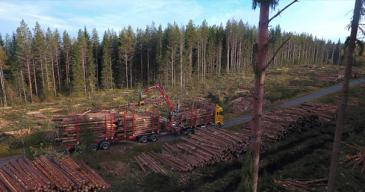 Metsähallitus siirtyy uusiutuvaan dieseliin