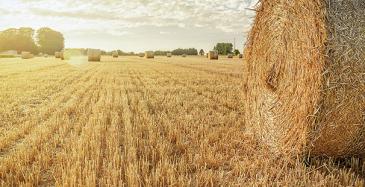 Suomeen 50 miljoonan biokiertotalousohjelma