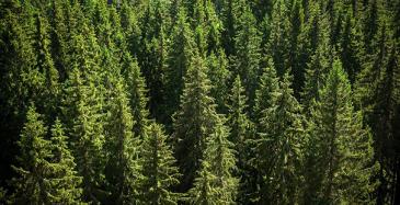 Ekosysteemi päästöjen kompensoinnille