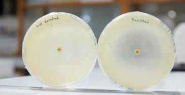 Yritykset huolissaan antibiooteista elintarvikkeiden toimitusketjuissa