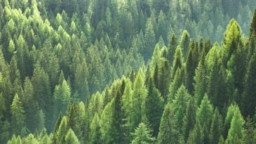 Suomi voisi kaksinkertaistaa biomassansa arvon