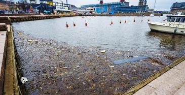 EU uudistaa laivojen jätehuoltodirektiiviä