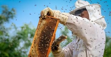 Tieto digitalisoi mehiläispesiä