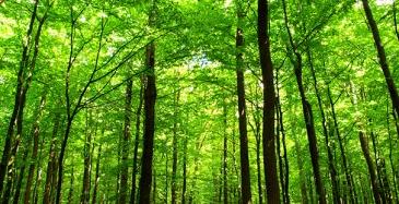 Metsätieto ja sähköiset palvelut digitalisoi alan tietoa