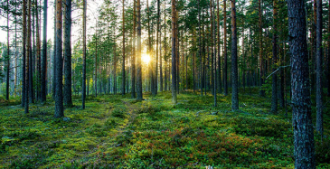 Suomi päivittää biotalousstrategian